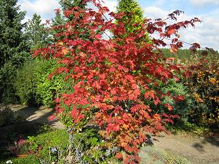 Herbst in Tostedt