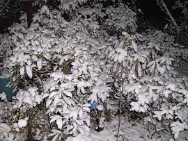 Schnee auf Büschen am Abend