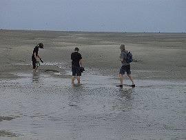 AlbinZ im Wattenmeer bei der Insel Neuwerk