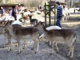 Wildpark Lüneburger Heide Nindorf-Hanstedt