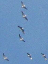 Zugvögel: Ab in den warmen Süden