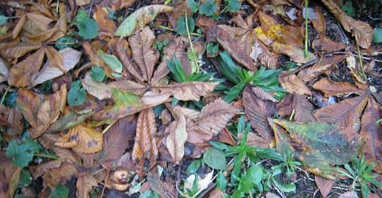 Blättersammlung unterm Kastanienbaum