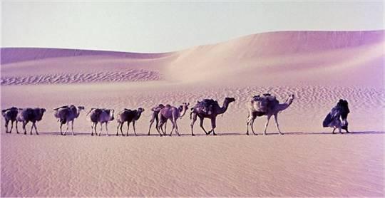 7.000 Kilometer durch die Wüste: Unterwegs mit der Salzkarawane im Niger © Klaus Höppner