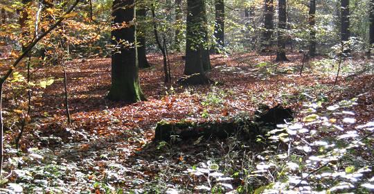 Durch Wald, über Feld und Wiesen ... Herbst 2012 Düvelshöpen, Tostedt