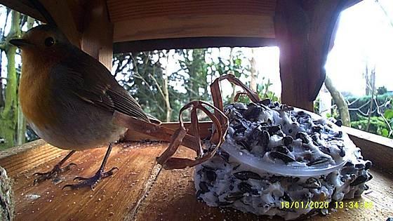 Futterhaus mit Kamera: Rotkehlchen
