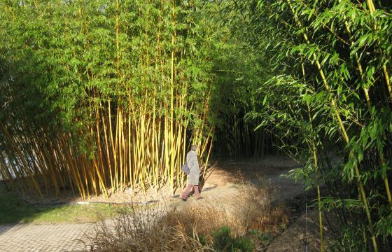 Wanderung durch den Bambushain (Botanischer Garten Hamburg 17.02.2019)