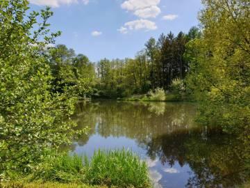 Teich (Este) bei Bötersheim