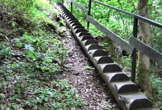 Über Stock und Stein: Baumstammtreppe
