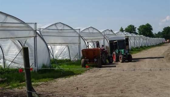 Gewächshäuser mit Erdbeerpflanzen in Tostedt 2021