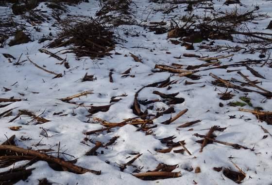 Der Schnee von gestern: Düvelshöpen/Tostedt