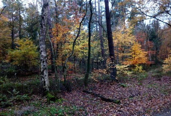 Im Wald (1) - unterhalb des Otterbergs in der Nähe des Schafstalls Riepshof