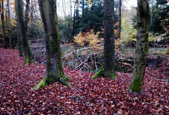 Im Wald (2) - Im Düvelshöpen