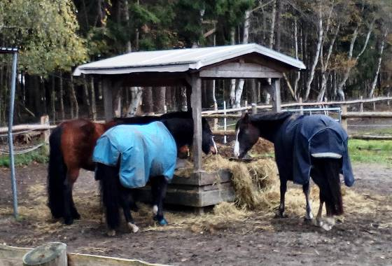 Pferde beim Futtern im Düvelshöpen
