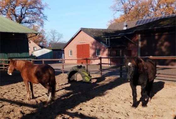 Pferde in Dohren