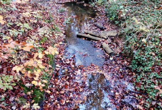 Tostedter Graben im Düvelshöpen (Zufluss zur Oste)