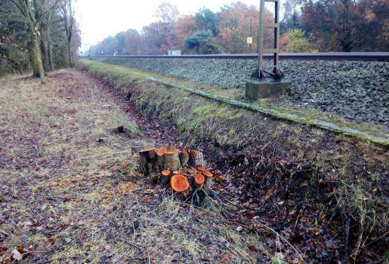 Gefällte Bäume an der Bahnstrecke Hamburg - Bremen